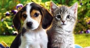 imagenes-de-perros-vs-gatos-7