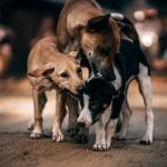 Perros callejeros: ¿Cómo controlarlos?