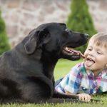 Los beneficios que ofrece tener una mascota