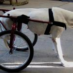 Calidad de vida también para nuestras mascotas